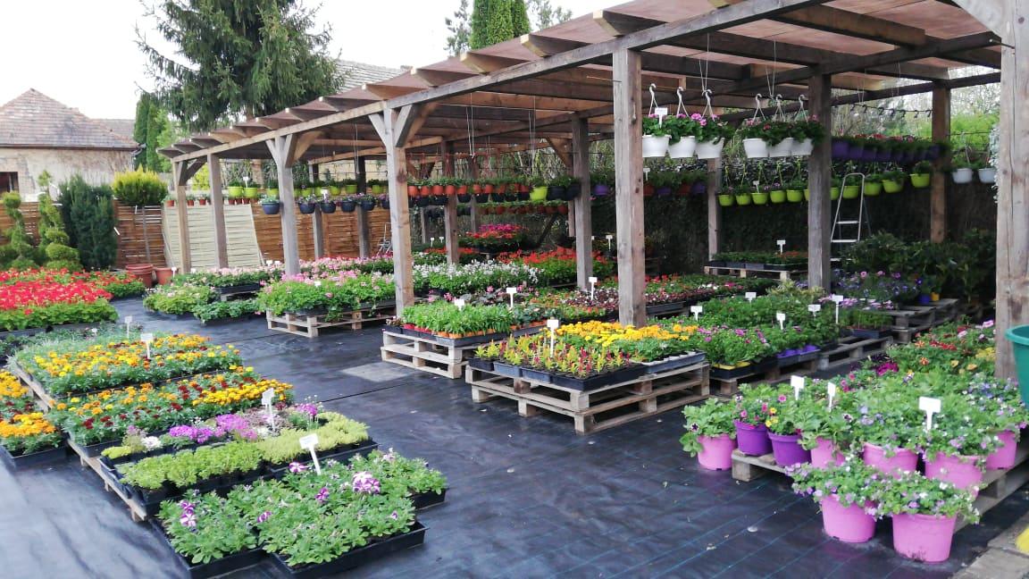 Kertészet Virág Balassagyarmat