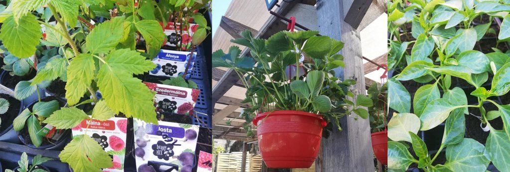 kertészkedés-otthon